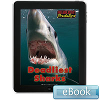 Deadliest Predators: Deadliest Sharks eBook